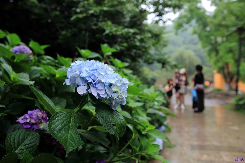 植物园--29.jpg