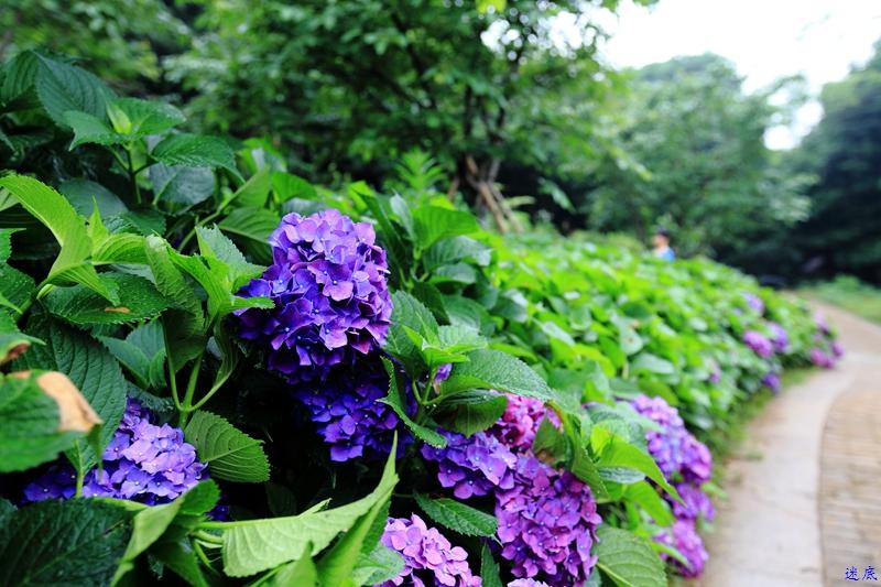 植物园--32.jpg