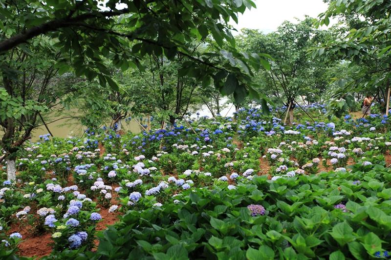植物园--33.jpg