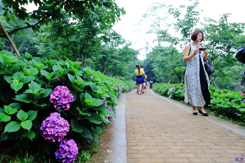 植物园--37.jpg