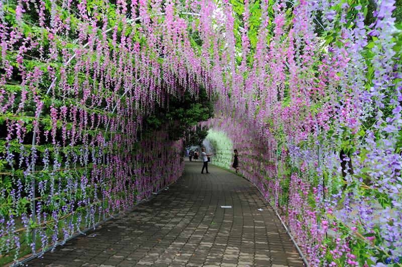 紫藤花海--15.jpg