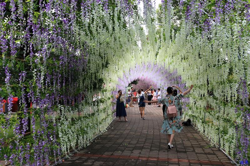 紫藤花海--27.jpg