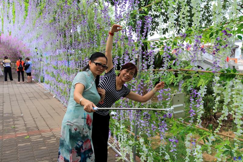 紫藤花海--30.jpg