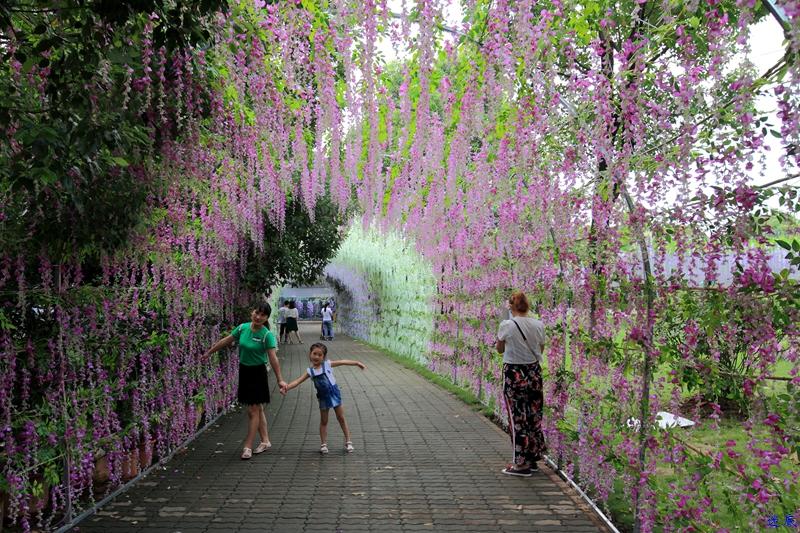 紫藤花海--33_副本.jpg
