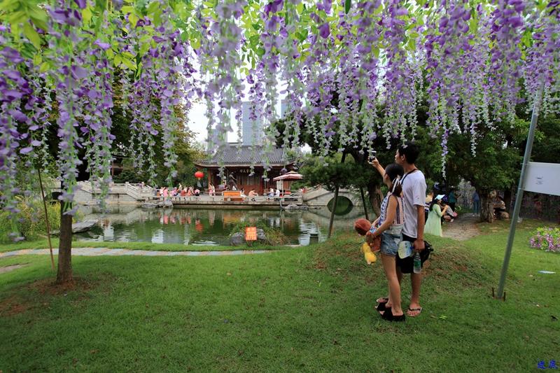 紫藤花海--62.jpg