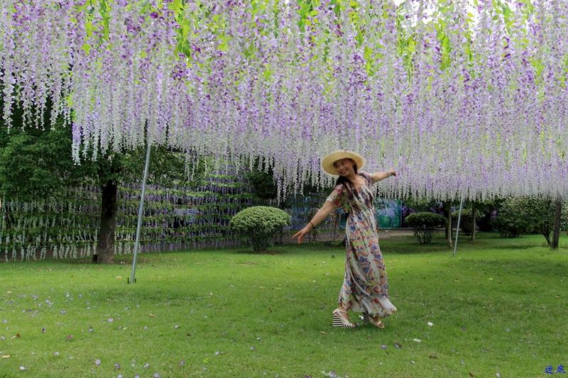 紫藤花海--65_副本.jpg
