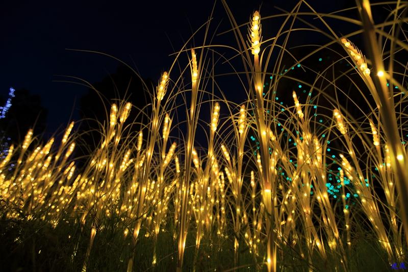 洋湖草雕灯光节--102.jpg