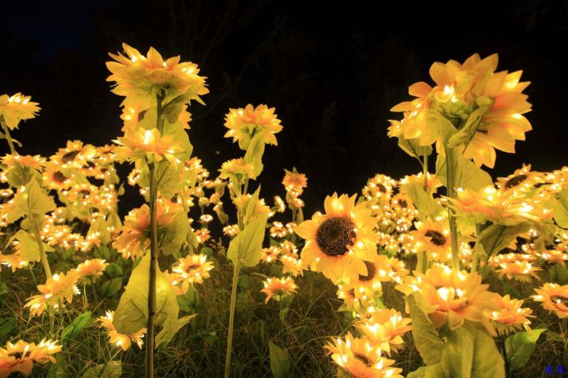 洋湖草雕灯光节--112.jpg