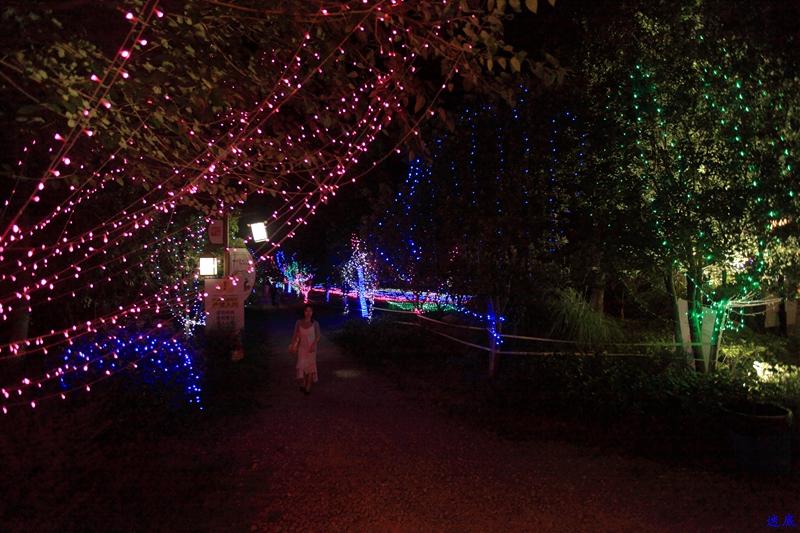 洋湖草雕灯光节--181.jpg