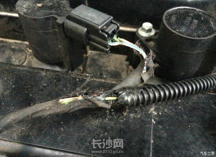 老鼠咬汽车3.jpg
