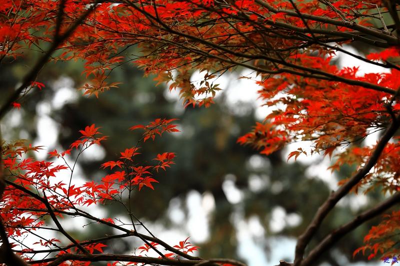 烈士公园之秋34.jpg