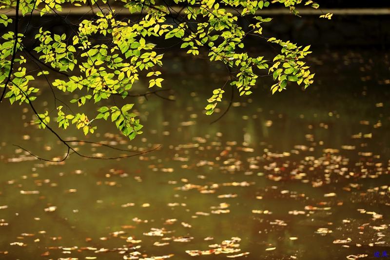 烈士公园之秋54.jpg