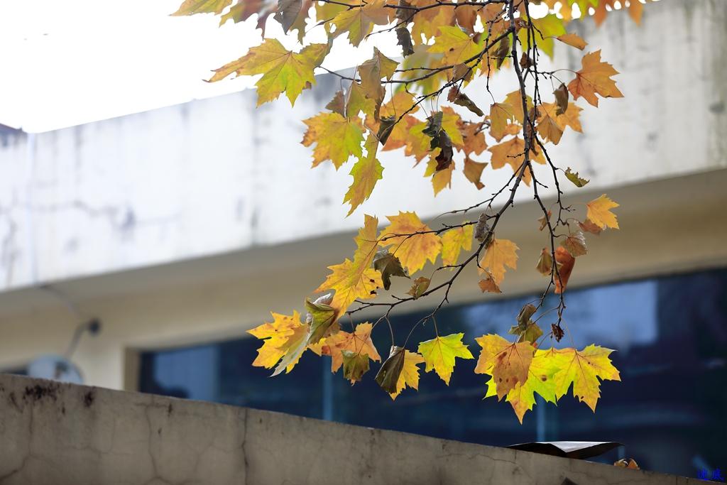 铁道学院秋色--35.jpg