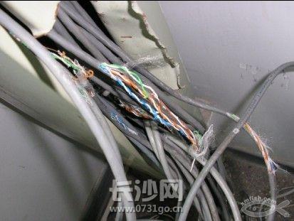 老鼠咬电线2.jpg