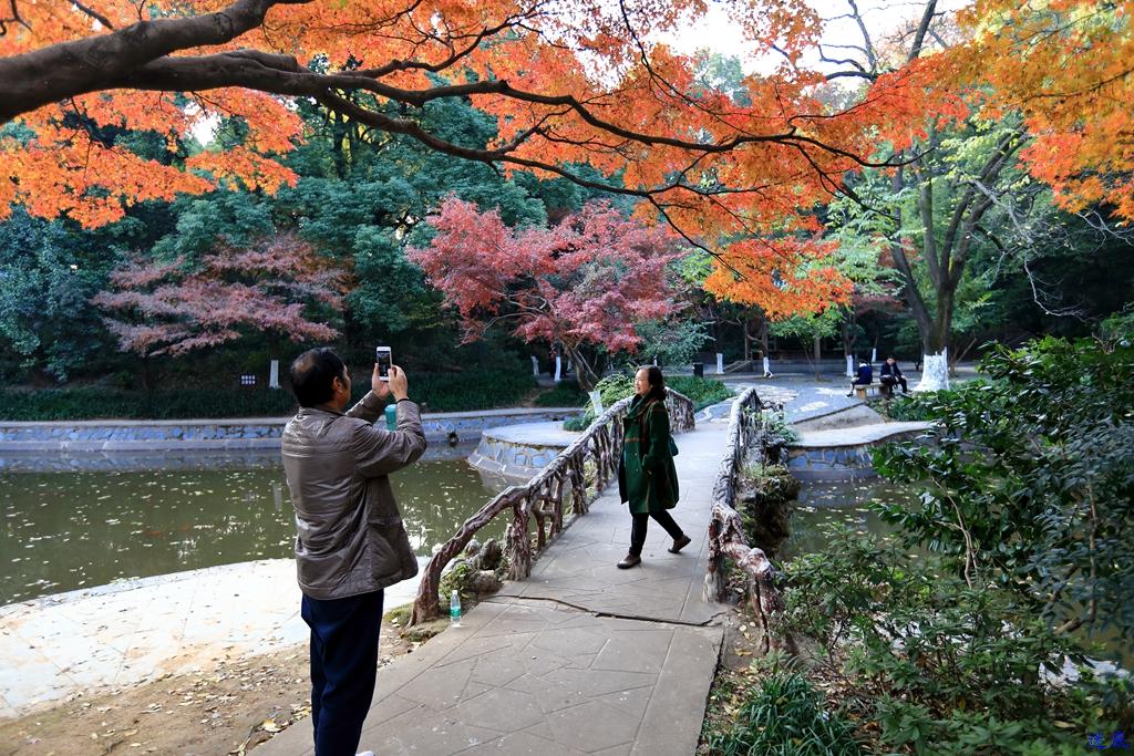 初冬的公园--48.jpg