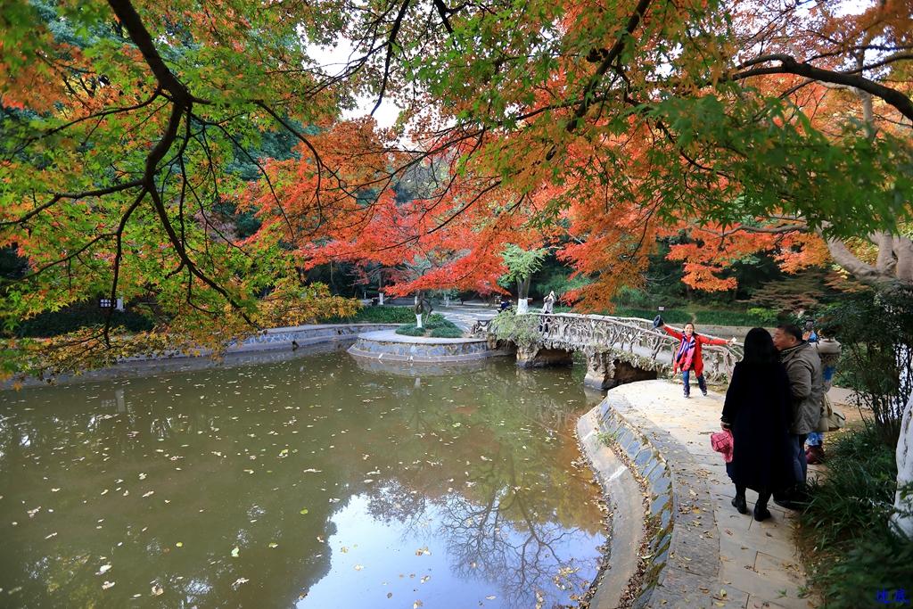 初冬的公园--50.jpg