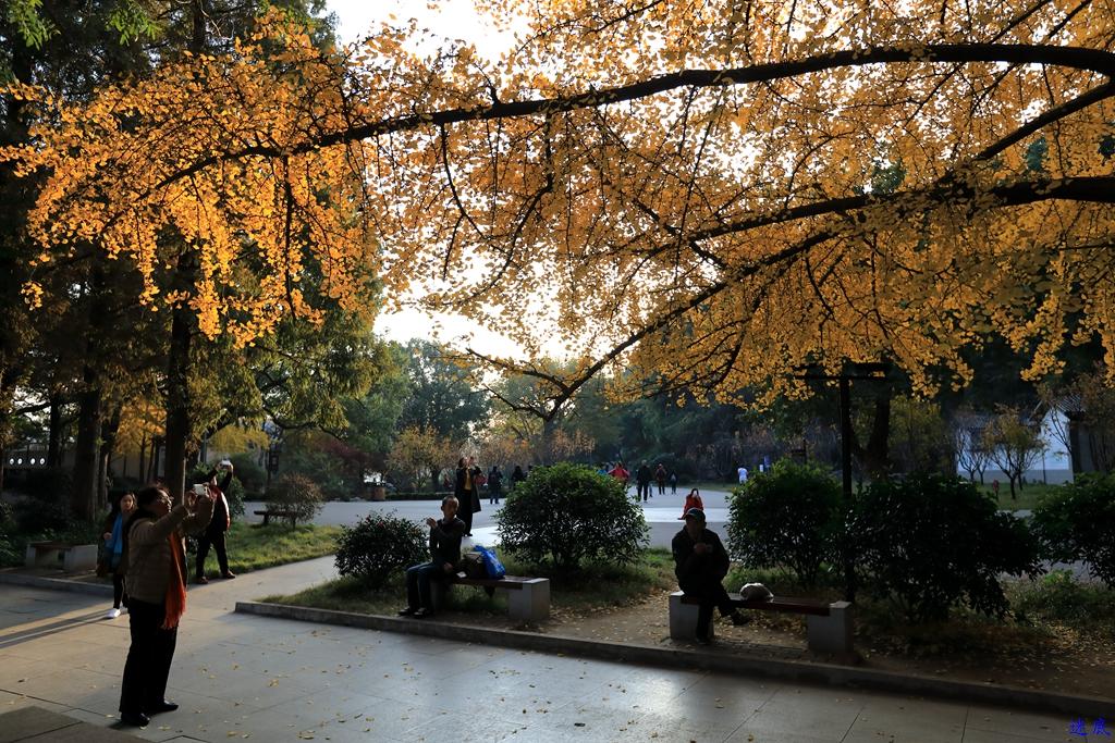 初冬的公园--71.jpg