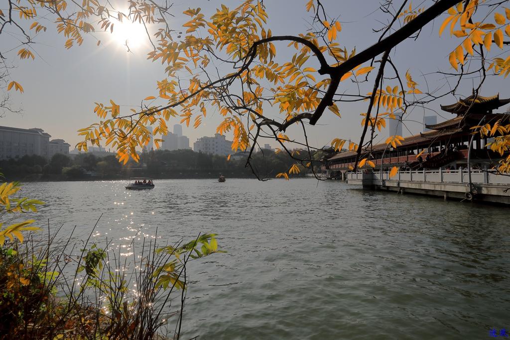 初冬的公园--11.jpg