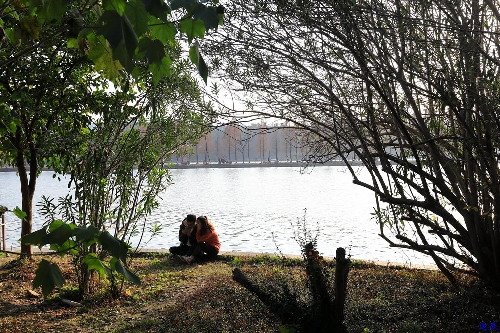 初冬的公园--28.jpg