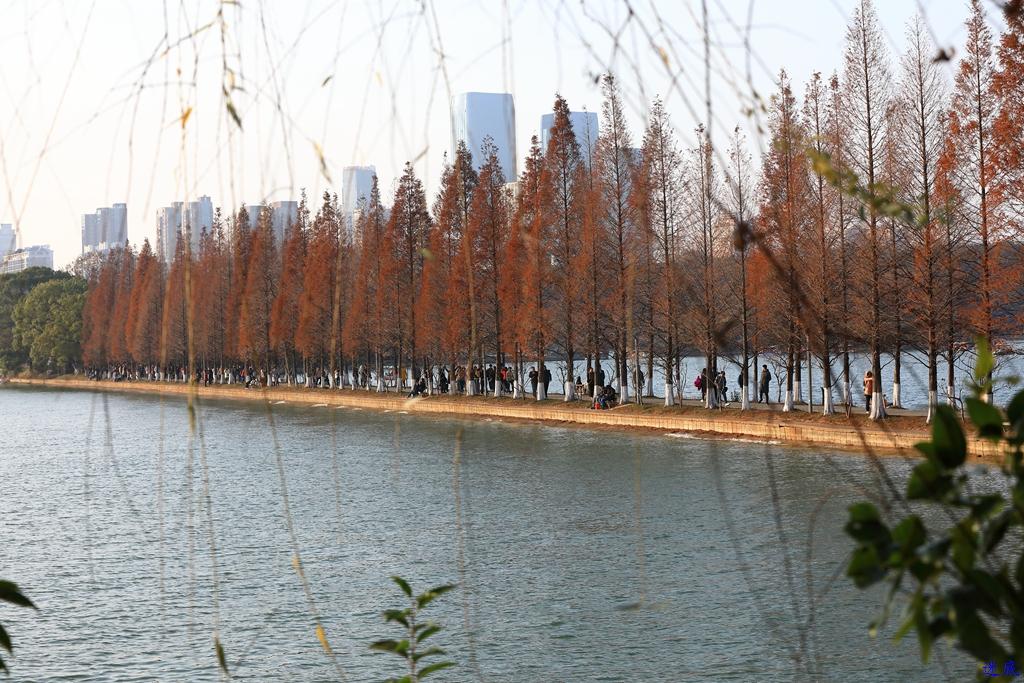 初冬的公园--55.jpg