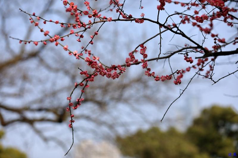 桔洲初春--10.jpg