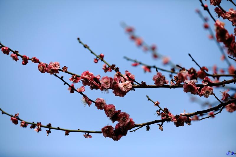桔洲初春--19.jpg