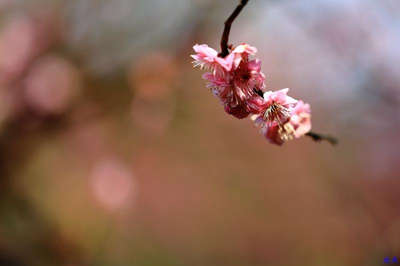 桔洲初春--26.jpg