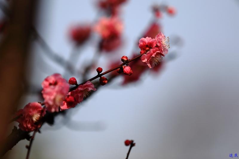 桔洲初春--35.jpg