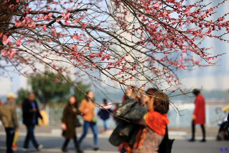 桔洲初春--52.jpg
