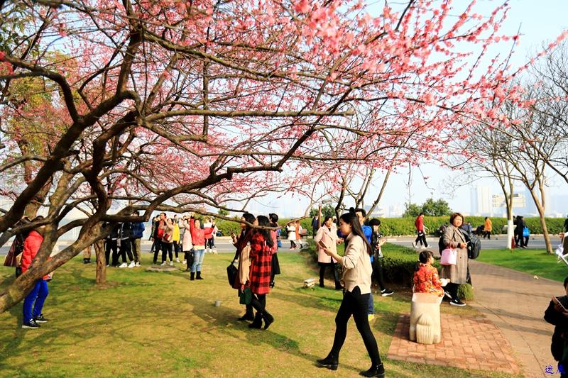 桔洲初春--72.jpg