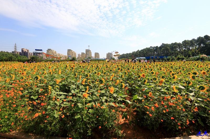 10.3植物园--118.jpg