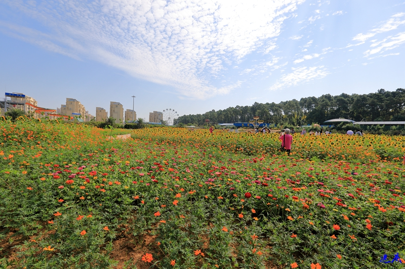 10.3植物园--110.jpg