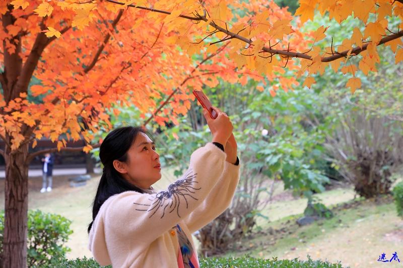 11.19红枫--11.jpg