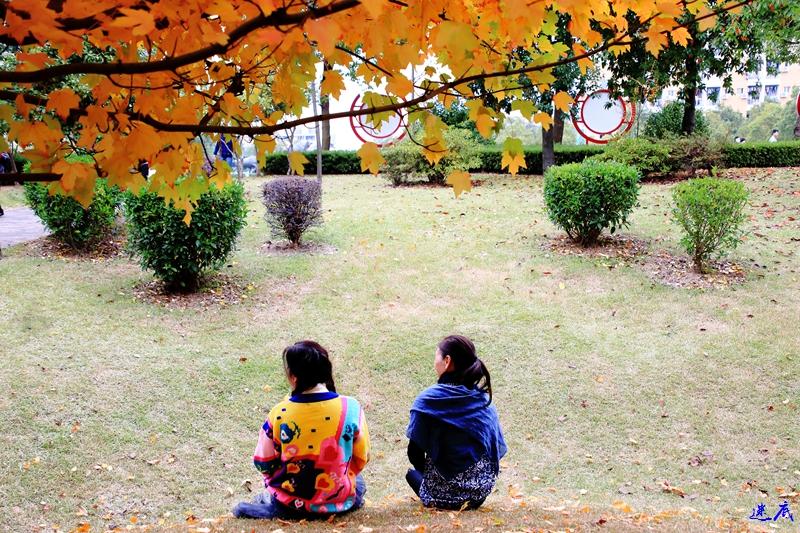 11.19红枫--52.jpg