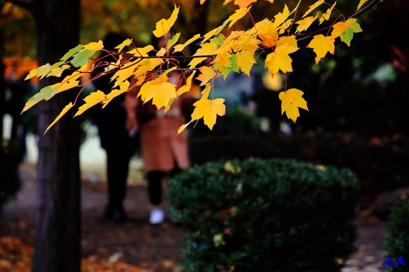 11.19红枫--29.jpg