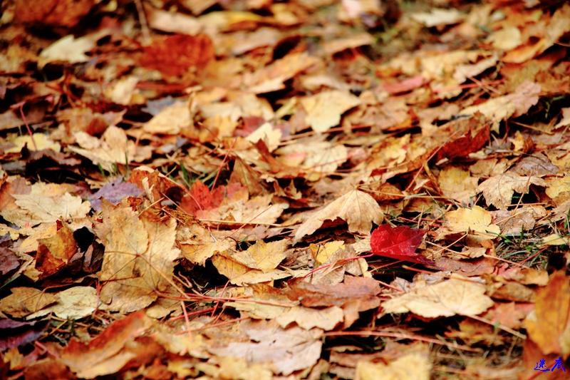 11.19红枫--84.jpg