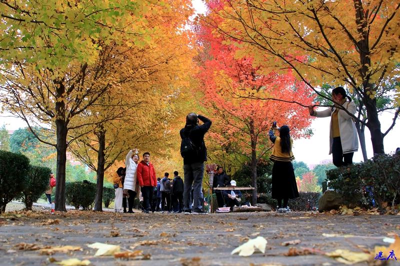 11.19红枫--144.jpg