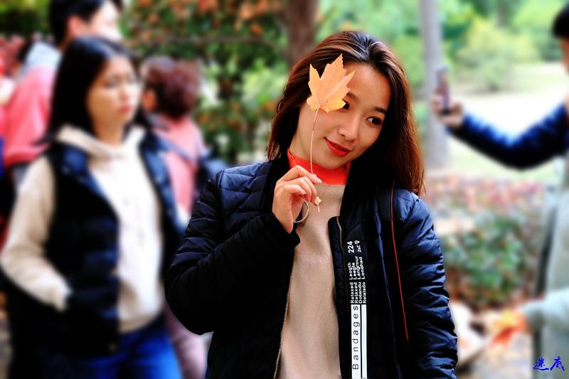 11.19红枫--93.jpg