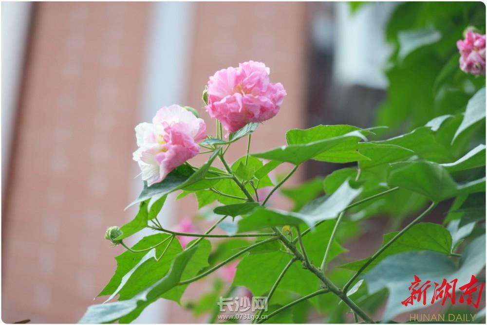 长郡双语2.jpg