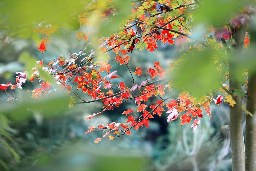 生态园之秋--67.jpg