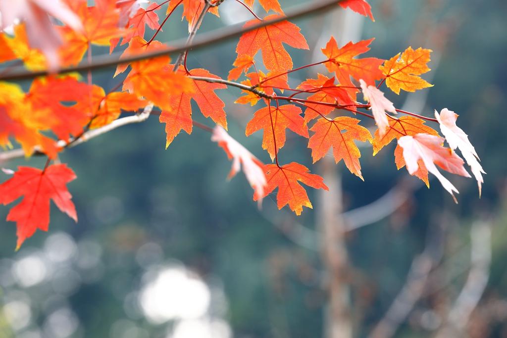 生态园之秋--84.jpg